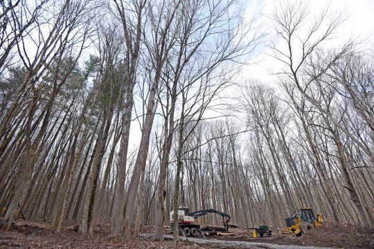 A forested area on Ohio 95 west of Pleasant Hill Lake is being logged.