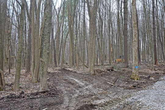 A path for heavy machinery was cleared in the forest near Pleasant Hill Lake for a logging project.