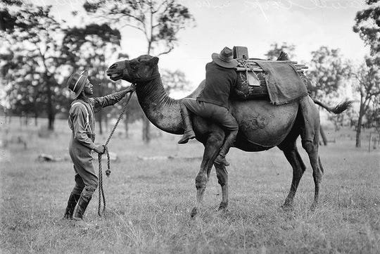 Soldiers train with a dromedary camel in this photo of the US Camel Corp, which was active from 1856 to 1866 and headquartered at Old Camp Verde near Kerrville.  The Army formed the unit to see how the desert animals would perform in the American Southwest.