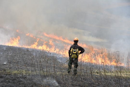 Delaware Nature Society's land steward Dave Pro observes the prescribed burn at Mt. Cuba with a water pack on his back to put out errant flames.