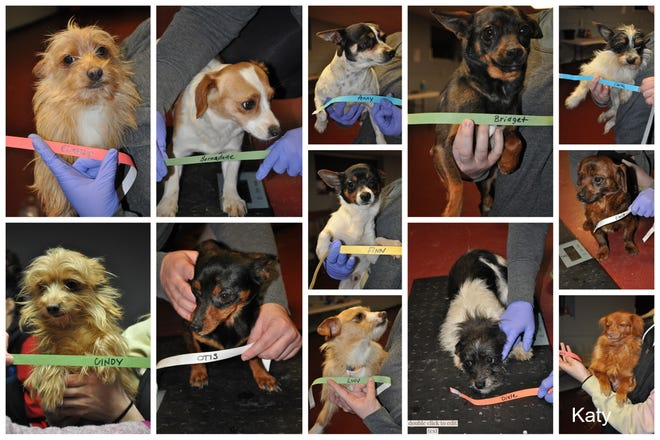 More than 20 small-breed dogs were rescued from a Lomira house Friday night. They are now at the Dodge County Humane Society.