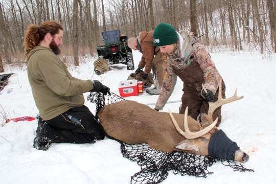 Department of Natural Resources wildlife technicians Wes Ellarson, Matt Hunsaker and Dana Jarosinski (left to right) prepare to weigh an adult buck captured on private property near Dodgeville as part of the Southwest Wisconsin CWD, Deer and Predator Study. The project, slated to run from 2016-21, is in its final year of field work.