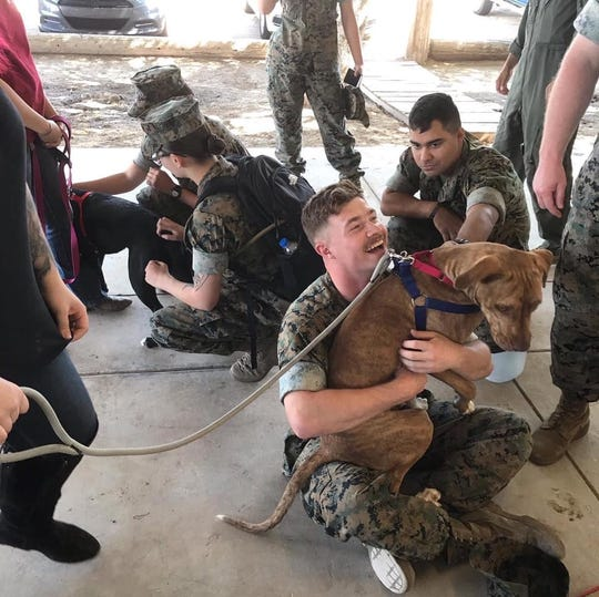 Pukka the dog hanging out with Marines from nearby base.
