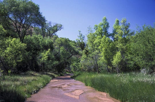 A healthy riparian area of Red Creek, a tributary of the Verde River, in 2005.