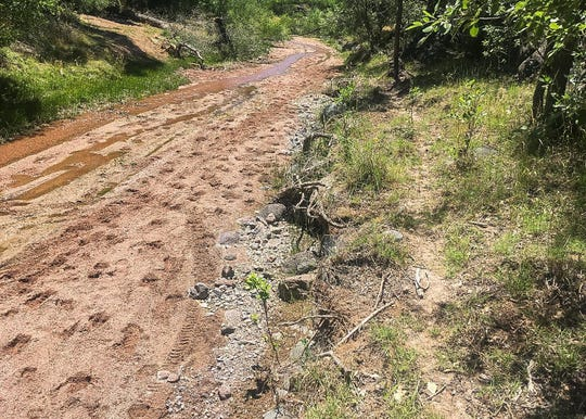 Cattle tracks in and along Red Creek, a tributary of the Verde in Tonto National Forest.