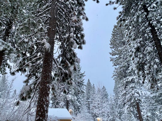 Snow covered trees in Incline on March 15, 2020