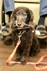 Bogey now has a new role of accompanying Richard Gardner in cancer treatments at TMH.
