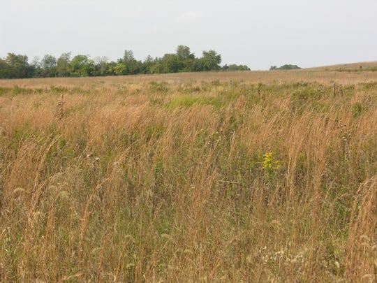 Big Brook Park in Marlboro has grasslands for bird habitats.