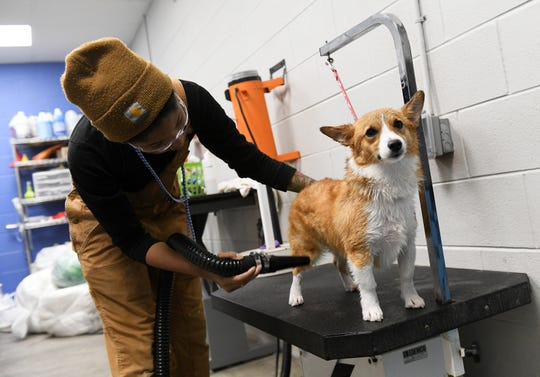 Groomer Mica Randolph blow-dries Pippa at Canine to Five, a doggy day-care in Detroit's Midtown, as clients cancel vacations and stay home from work with their pets. So far the grooming side of the business has remained steady.