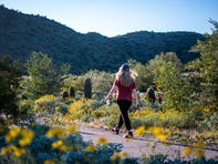 A woman hikes among wildflowers at Lost Dog Wash Trail in McDowell Sonoran Preserve on March 15, 2020.