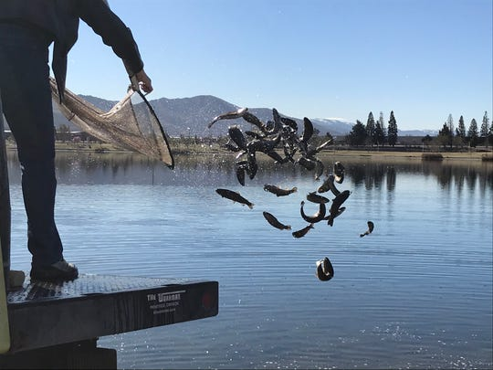 More than 4,500 trout were stocked into the Sparks Marina on March 12, 2020. It was the first of several fish stocking scheduled for this spring.