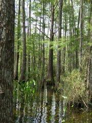 Yellow Fever Creek Preserve