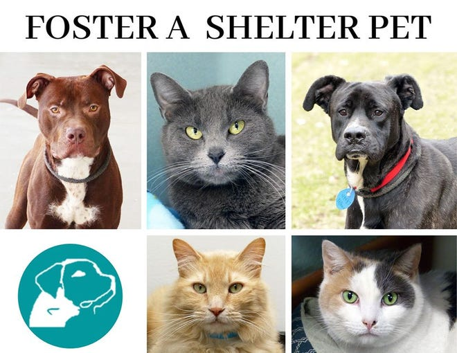 The Ingham County Animal Shelter found foster homes for 25 of its dogs and many of its cats so they could get attention and love as the shelter is closed during the coronavirus scare.