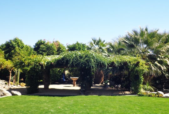 This massive shade arbor demonstrates the value of Banks rose for cooling large outdoor spaces.
