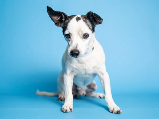 Frankie is available for adoption through the Arizona Humane Society. Those interested in learning more about adorable Frankie are encouraged to call the Arizona Humane Society at 602-997-7585 ext. 2156 and ask for animal number 629591.
