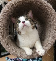 Scar is available for adoption at 11129 W. Michigan Ave., Youngtown. Call 623-876-8778 after 10 a.m.