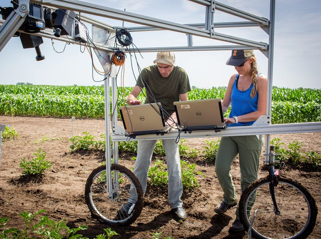 University of Illinois Research Technician Evan Dracup, left, and Postdoctoral Researcher Katherine Meacham-Hensold screen entire research plots for high-yielding photosynthesis traits. Credit: Claire Benjamin/RIPE project