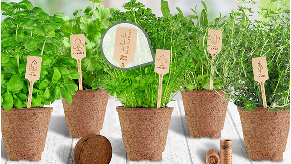 Grow fresh herbs right on your windowsill.