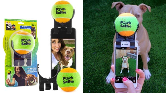 Dogs might not love photos, but they love tennis balls.