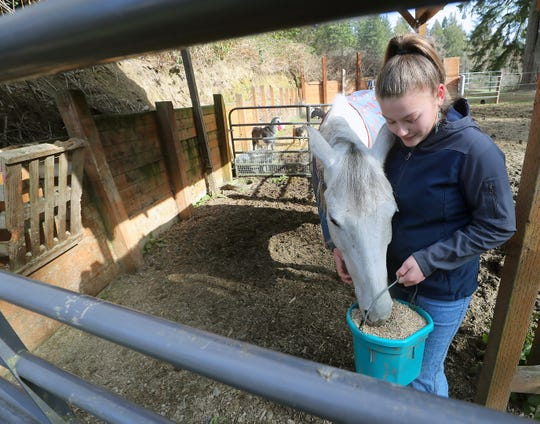 Sedgwick Junior High School student Kylee Morse, 14, feeds her horse Nellie at her South Kitsap home on Wednesday. Time at home from work and school is giving many extra time with their hobbies and projects.