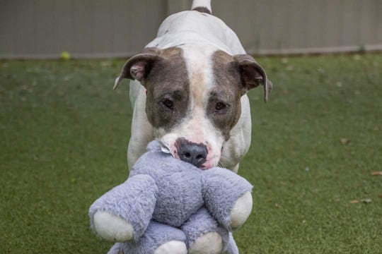 SPCA in Titusville currently has dogs like this available for adoption