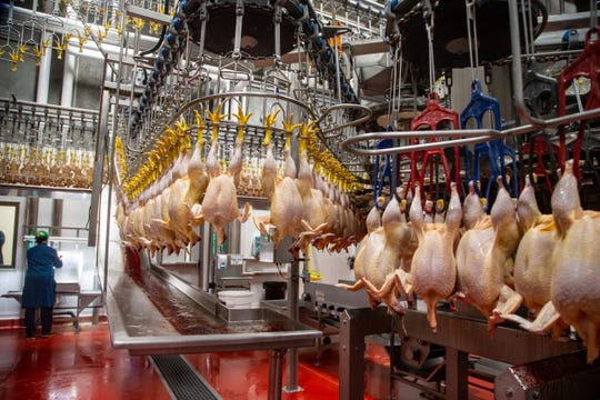 Workers soon will process about 2 million chickens a week for Costco at the Lincoln Premium Poultry plant in Fremont Nebraska.