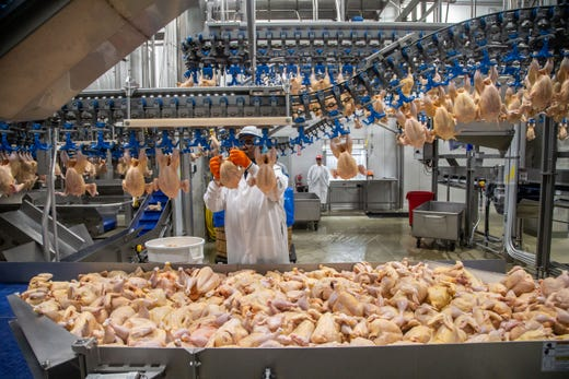 Workers process chickens for Costco at the Lincoln Premium Poultry plant in Fremont, Nebraska, in photos taken before the COVID-19 pandemic required social distancing measures.
