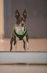 """""""Cash"""" is one of the many dogs available for adoption at the the new Cape Coral Animal Shelter."""