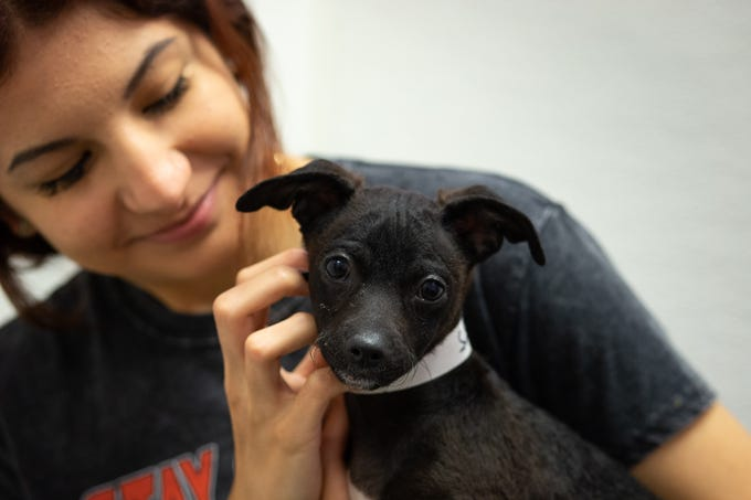 Jasmine Risch holds a puppy in a meet-and-greet room on March 18, 2020, at the Maricopa County Animal Care and Control shelter in Phoenix.