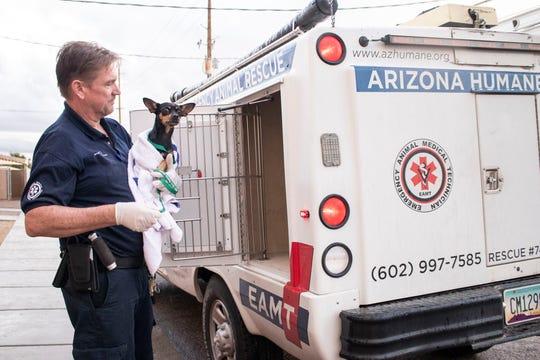 Arizona Humane Society Emergency Animal Medical Technician Jason Davis assists a dog on March 18, 2020.