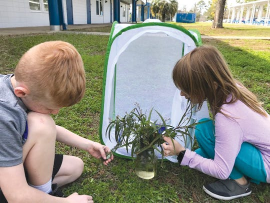 Maya Mistich and Brayden Thomas worry about a chrysalis.