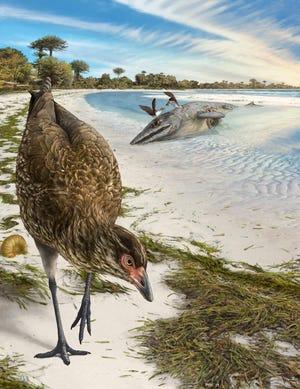An artist's reconstruction of the world's oldest modern bird, Asteriornis maastrichtensis, in its original environment.