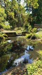 Murky water in Manuels Branch following a 183,000-gallon raw sewage spill.