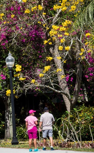 File: Pedestrians walk in front of flowering bushes and trees. Bursts of yellow are starting to show up in yards and in medians throughout Southwest Florida.
