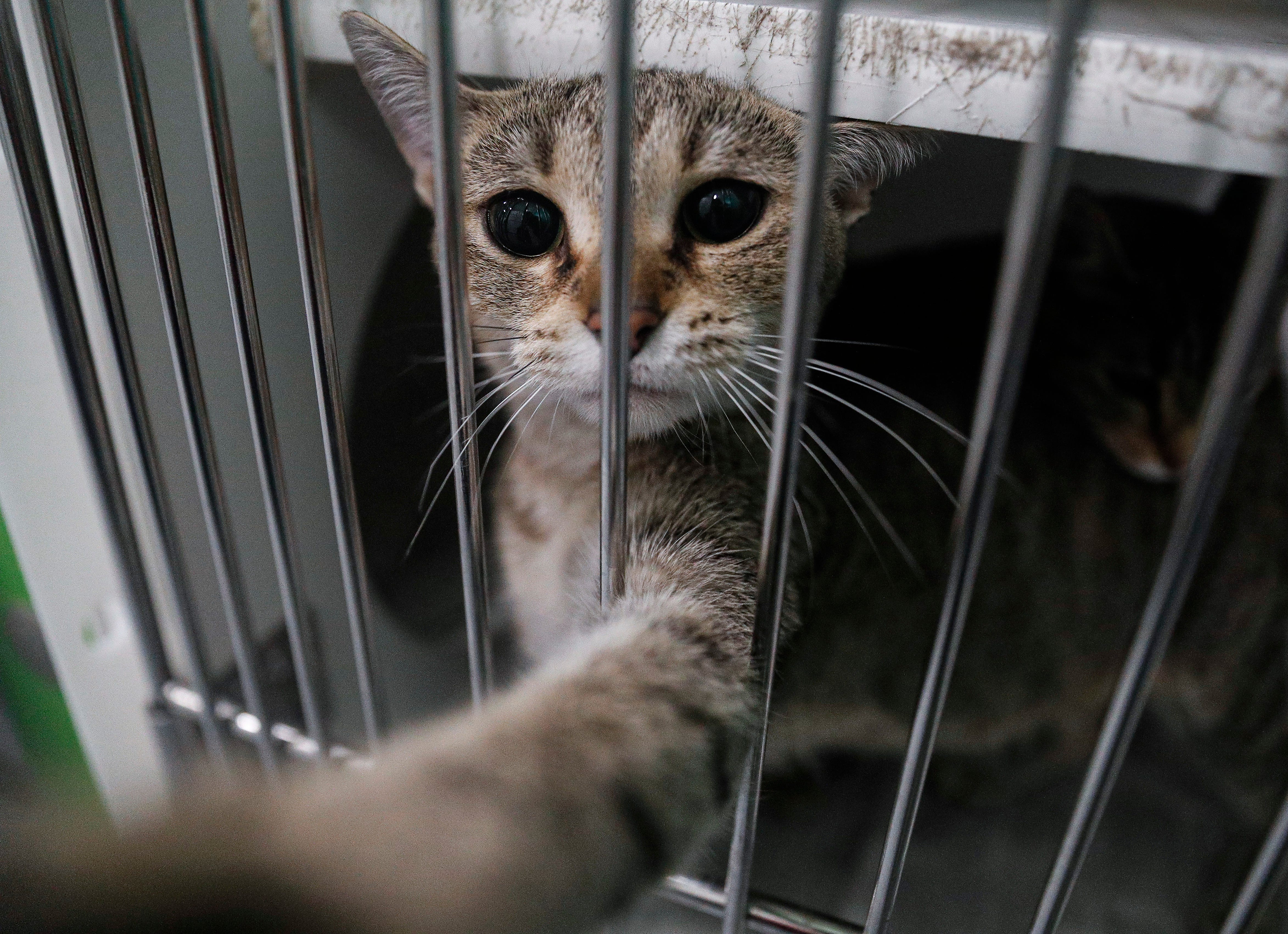 Coronavirus What To Know About Indianapolis Area S Animal Shelters