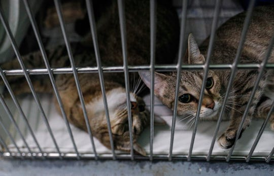 Cats and dogs sit in cages at the Indianapolis Animal Care Services off of South Harding Street, Indianapolis, Wednesday, March 18, 2020.