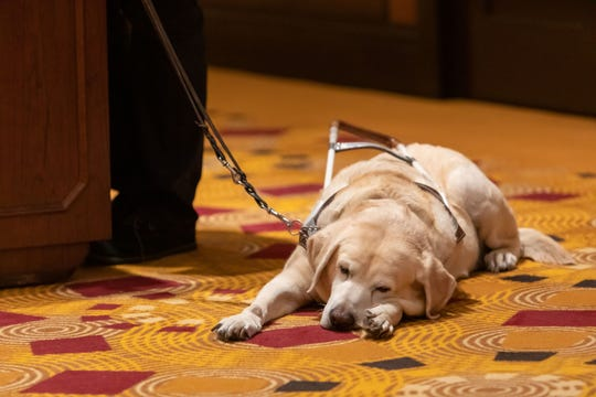 Nicole, service dog of Friends of Braille Institute Coachella Valley's chairman of the board Marie Hoesman, takes a break.