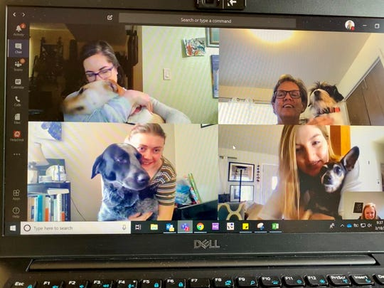 """Coloradoan journalists from top left Sarah Kyle, Pat Ferrier, Erin Udell, Jennifer Hefty and Sady Swanson, have a remote meeting with their """"newshounds"""" on March 18."""