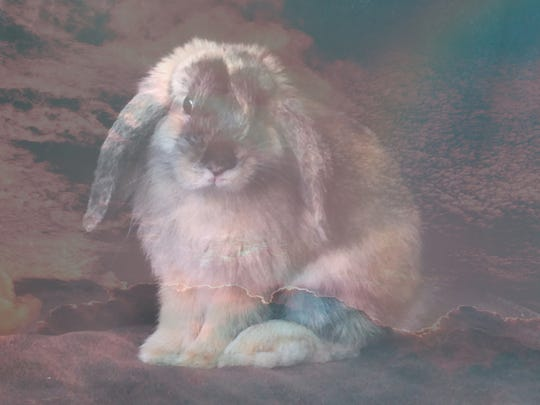 A portrait of Omar, the deceased pet rabbit of Chicago-based artist Adrian Wong, based on connections Omar made with Sturgeon Bay telepathic animal communicator Lynn Schuster.