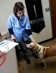 Dr. Margaret Eastman pets Jack, a hound mix, while looking over his medical charts during a routine checkup March 17 at Bay East Animal Hospital in Bellevue. To help minimize human contact during coronavirus, the practice has since delayed scheduling nonessential procedures and does curbside pickup of animals from its parking lot for appointments while pet owners wait in their car.