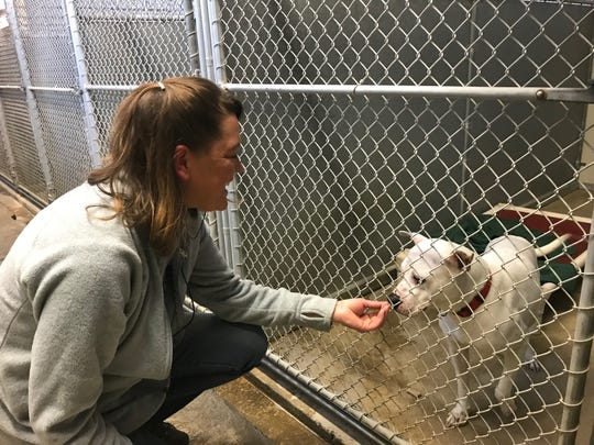 Fairfield County Dog Adoption Center & Shelter manager Erin Frost gives a treat to a dog at the shelter.