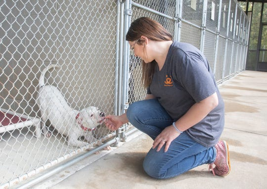 Jessica Gutmann, the manager of operations for the Santa Rosa County Animal Shelter, gives a dog some attention on March 20.