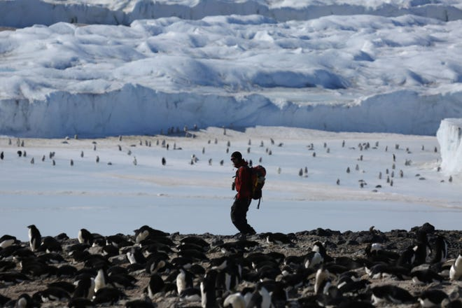 Researchers are studying viruses in the polar region to try and better understand this ecosystem, which is expected to change drastically due to climate change.