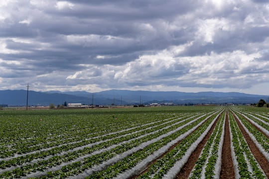 A photograph of fields near Natividad Road on Friday, March 20, 2020.