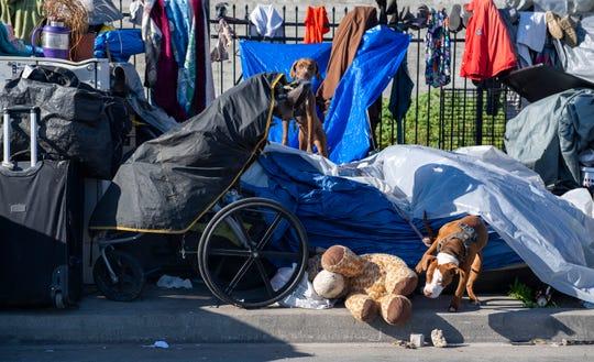 Unos perros juegan cerca de una persona sin hogar en Chinatown, el jueves 19 de marzo de 2020.