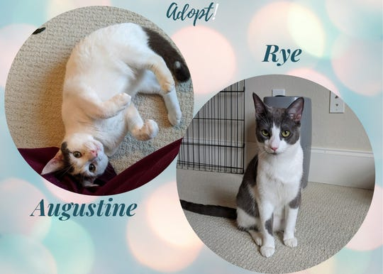 Augustine (A184101) andRye (A184099)are a 9-month-old brother/sister pair needing a home.