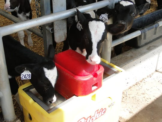 Keeping waterers and feed alleys clean as well as mixing equipment is important for keeping a healthy herd and encouraging feed and water intake.
