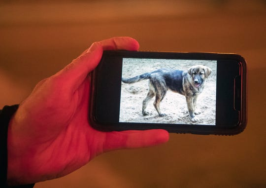 Paul Vanasek shows a photo of the German Shepherd- Great Pyrenees puppy that brought him to Memphis, Tenn., on Friday March 20, 2020.