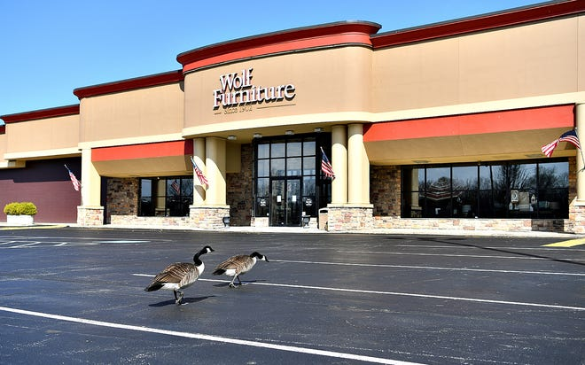 Geese meander in the empty parking lot at Wolf Furniture in Springettsbury Township, Saturday, March 21, 2020. Dawn J. Sagert photo
