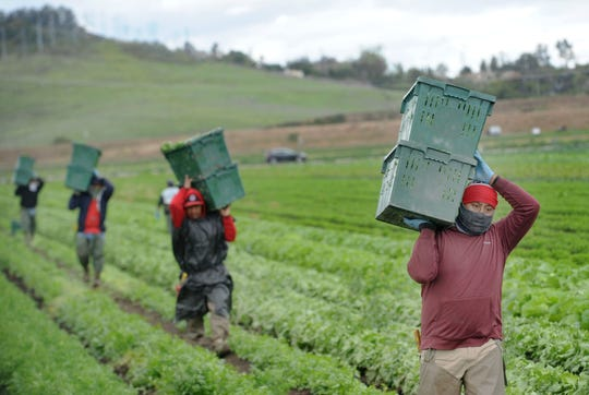 Farmworkers carry boxes of harvested produce in Moorpark.